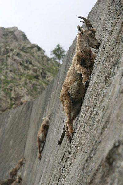 いやこれは無理でしょってとこまで登る登る pic.twitter.com/U5rCkUYqWy
