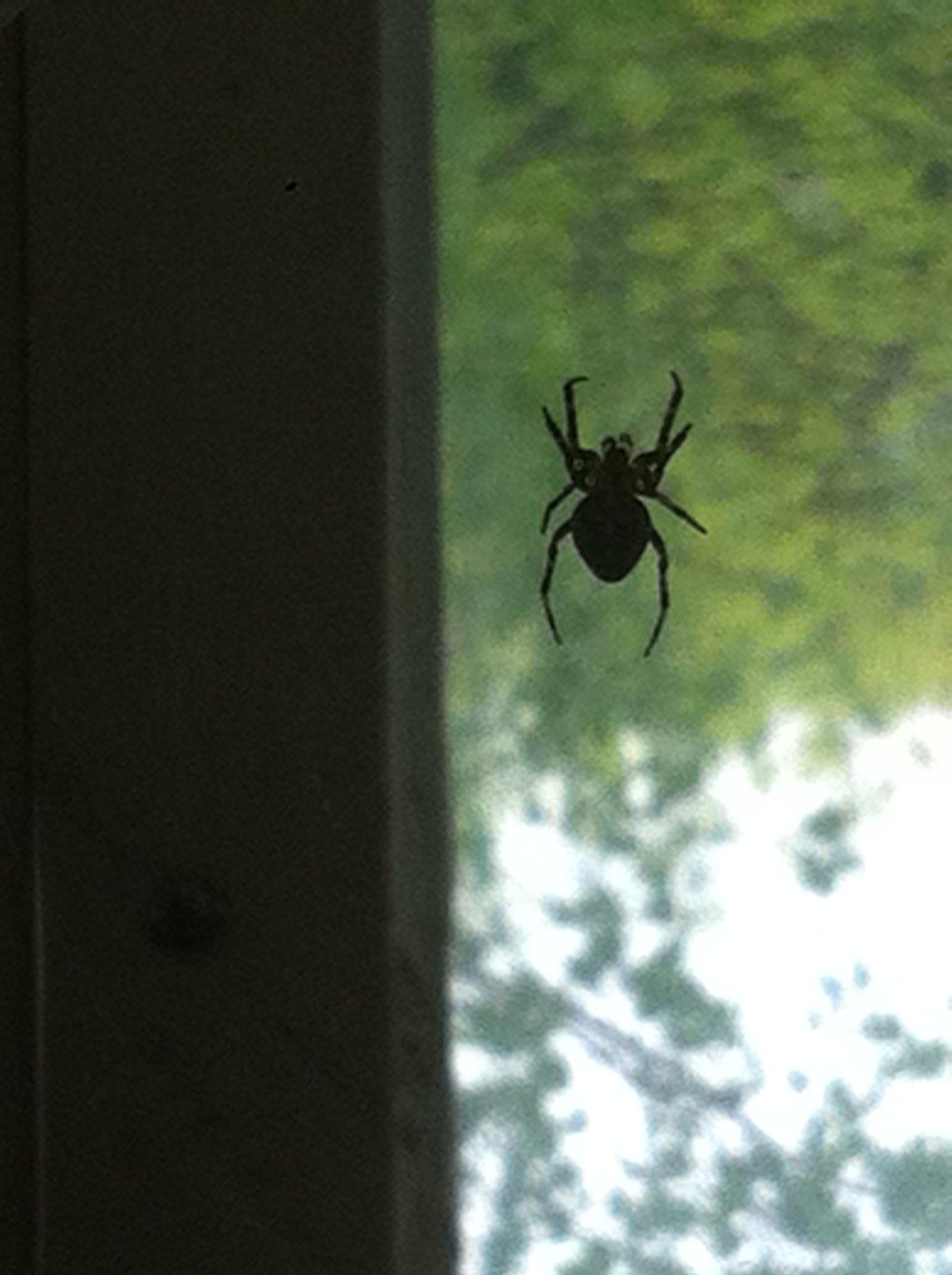 пауки на балконе фото принято дарить
