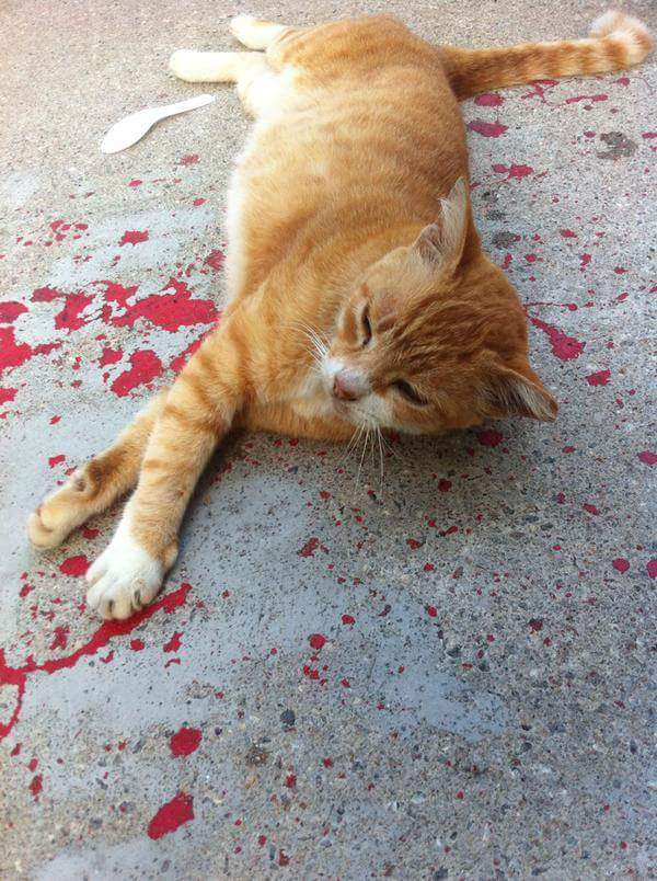 駆けよってみて、初めて気づいたことは.....乾いた赤ペンキの上で、ネコが昼寝しているだけだった。😄全然、怪我なんかしていない。「にゃんか、わたしにようなの?」(ネコ) pic.twitter.com/mjyE5jAgI5