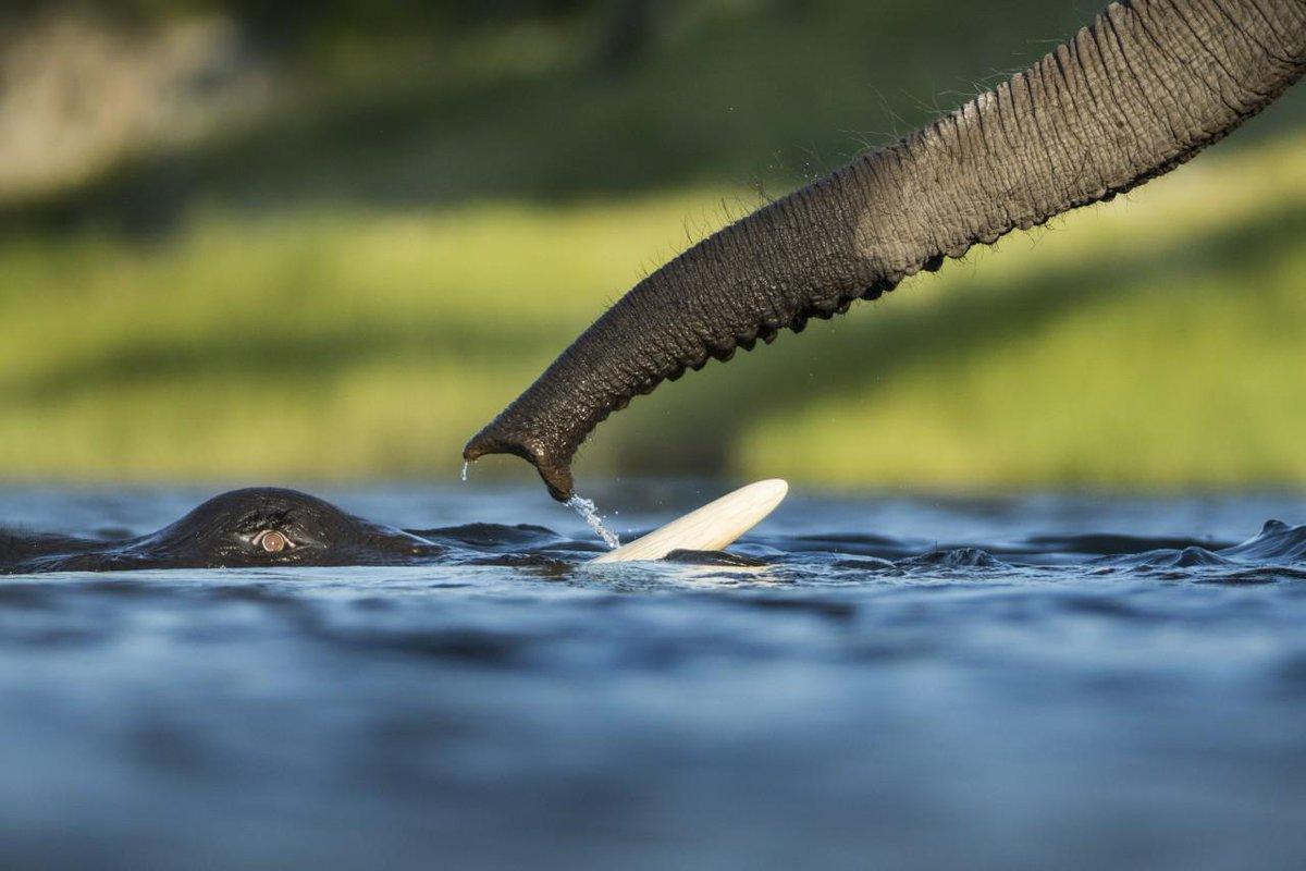.@radiocartable prend les manettes du #TelSonne pour évoquer les espèces en danger ► http://t.co/S4ol8speak @lnjouan http://t.co/CHvXEowoVy