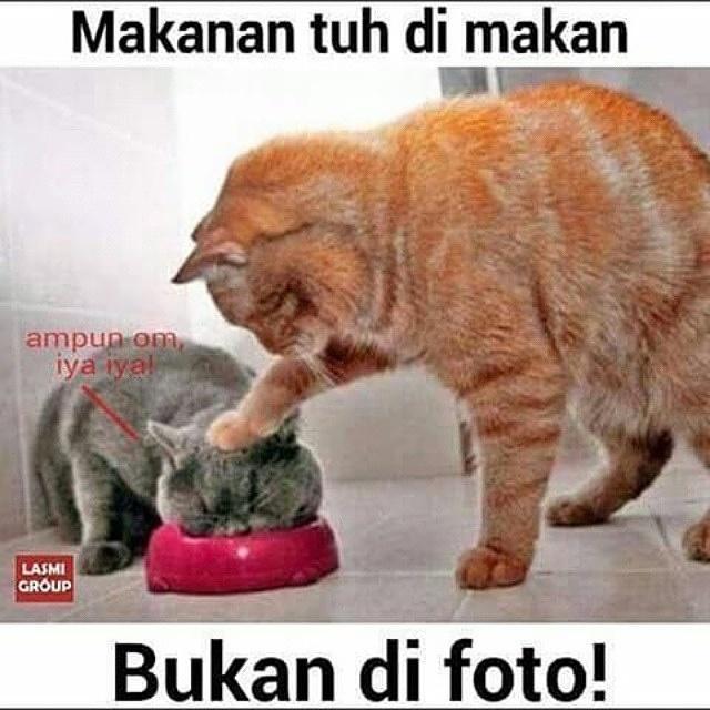 Kompulan Meme Kucing Lucu Vebma Com