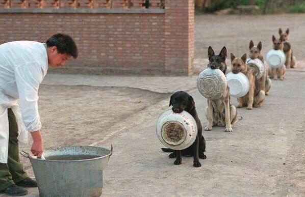 """""""Police dogs waiting for dinner in China"""" ht @imgur http://t.co/PT3B9ZMwk1"""
