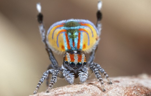Are these the most beautiful spiders in the world? Absolutely! http://t.co/qyNf3bId6I http://t.co/bMH3exhkLG
