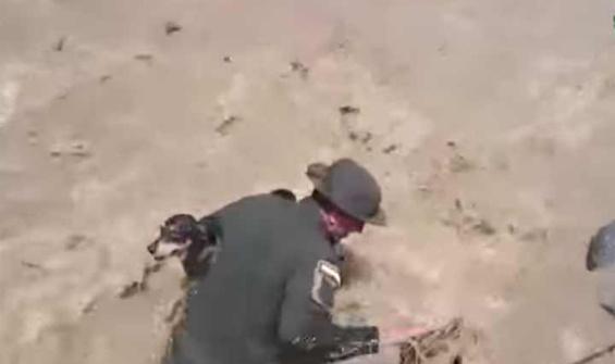 """VIDEO Animali: il salvataggio di """"Principe"""" in Colombia"""