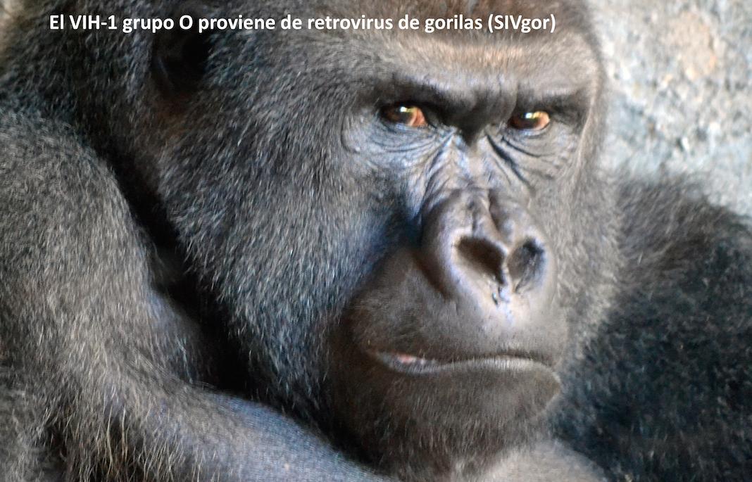 El VIH-1 grupo O proviene de retrovirus de gorilas (SIVgor) #microMOOC http://t.co/PoZiUkpCG4 http://t.co/pG3XDWQBc5