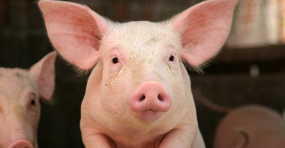 RT @MercyForAnimals: BREAKING!! Walmart announces sweeping animal welfare policy following intense campaign by MFA. http://t.co/e9LvqtBWbT …