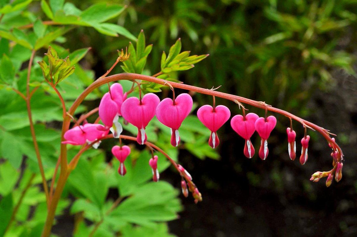 Картинка разбитое сердце цветы