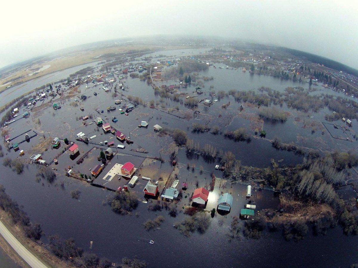 фото наводнения черная речка грибов подвале