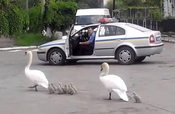 trio ukraine travel escorts