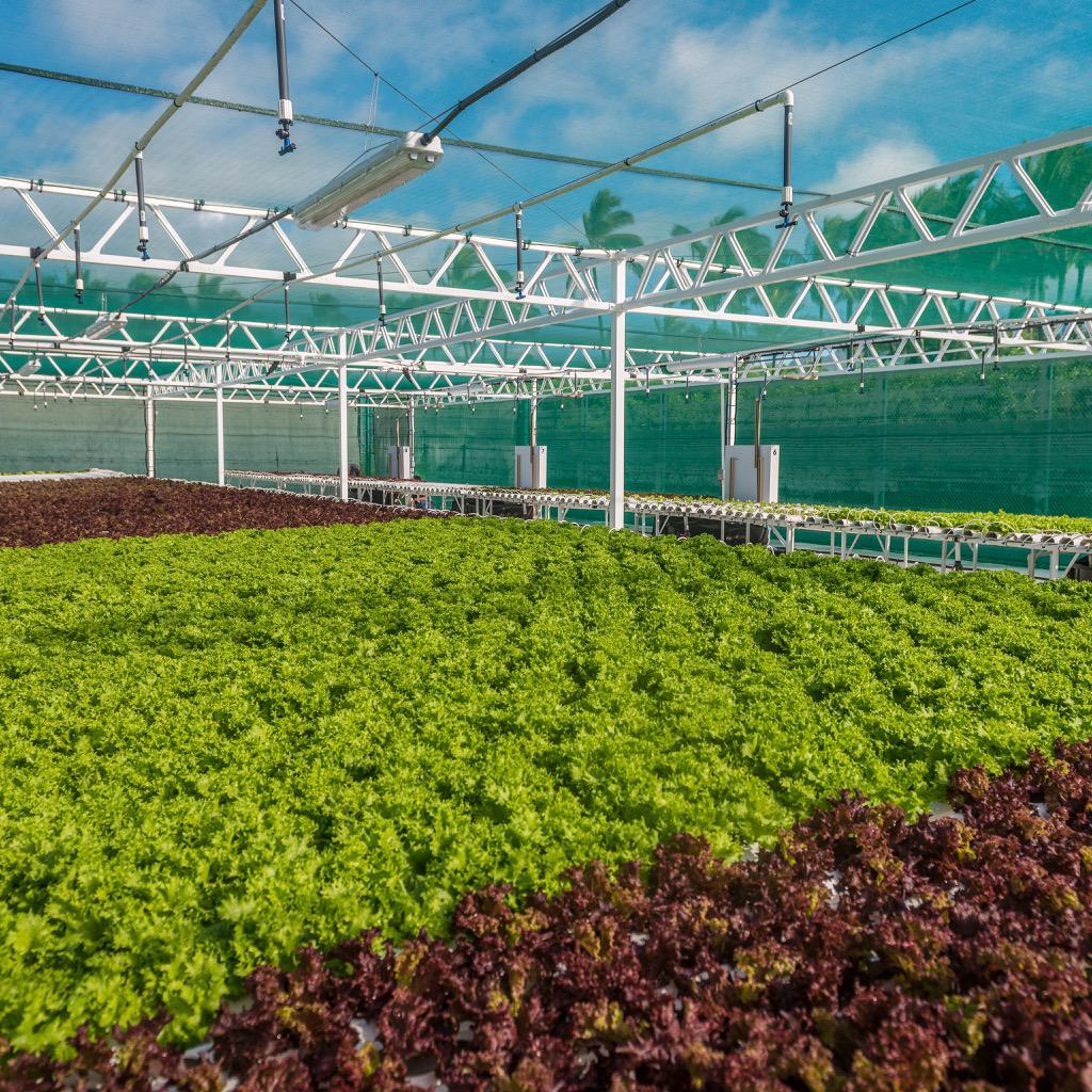 """@TastingKauai: @GrandHyattKauai  4000 SF hydroponic farm grows lettuce for on-site restaurants. #eHIFarmDay15 http://t.co/gdJyo3NVjQ"""