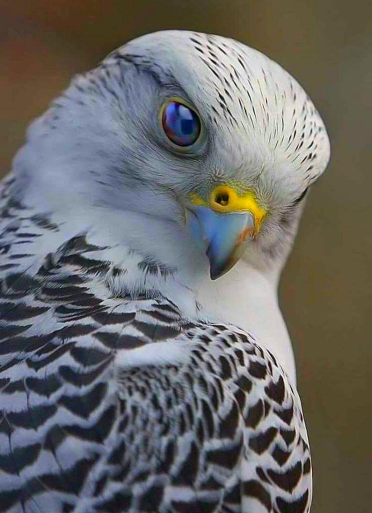 Pensive https://t.co/dV04JHuxq8 c @a70199617 #nature #birds #photography