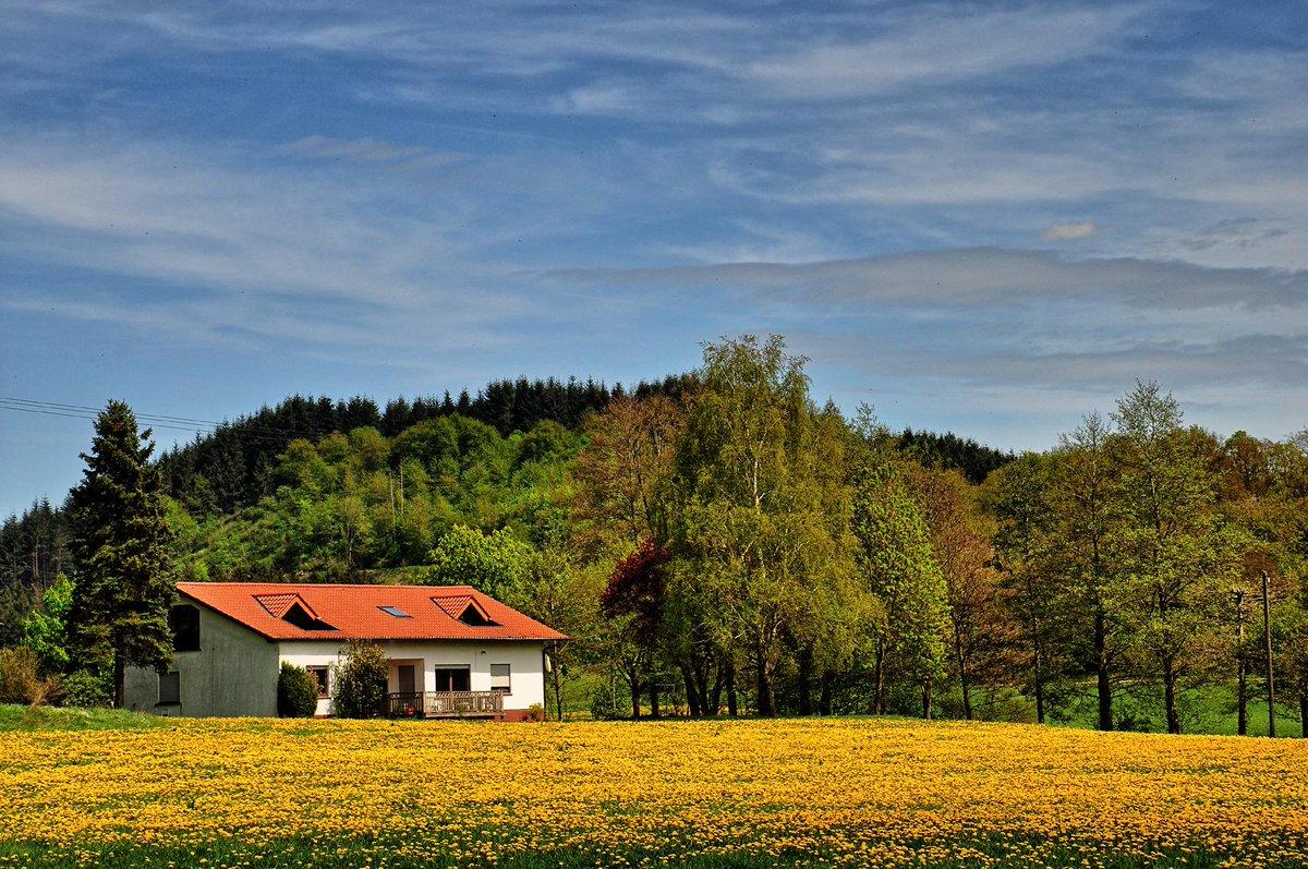 Guten Morgen aus der #Vulkaneifel (noch) ein Traum in Gelb. Wünsche Euch schöne Pfingsten  #Wandern #RLPerleben http://t.co/M7PP24T7V0