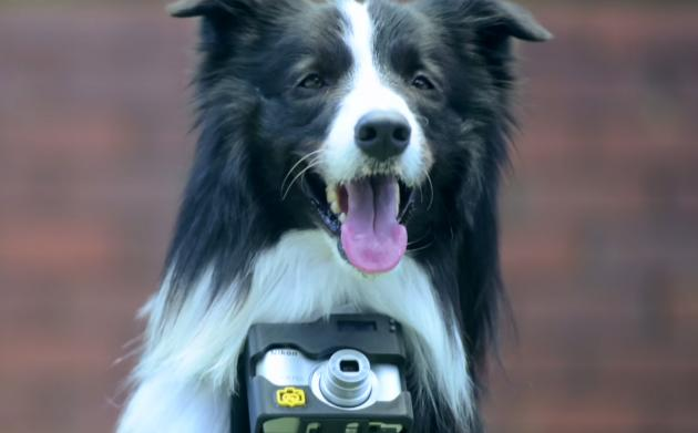 Nikon's doggy camera mount snaps when Rover gets excited: