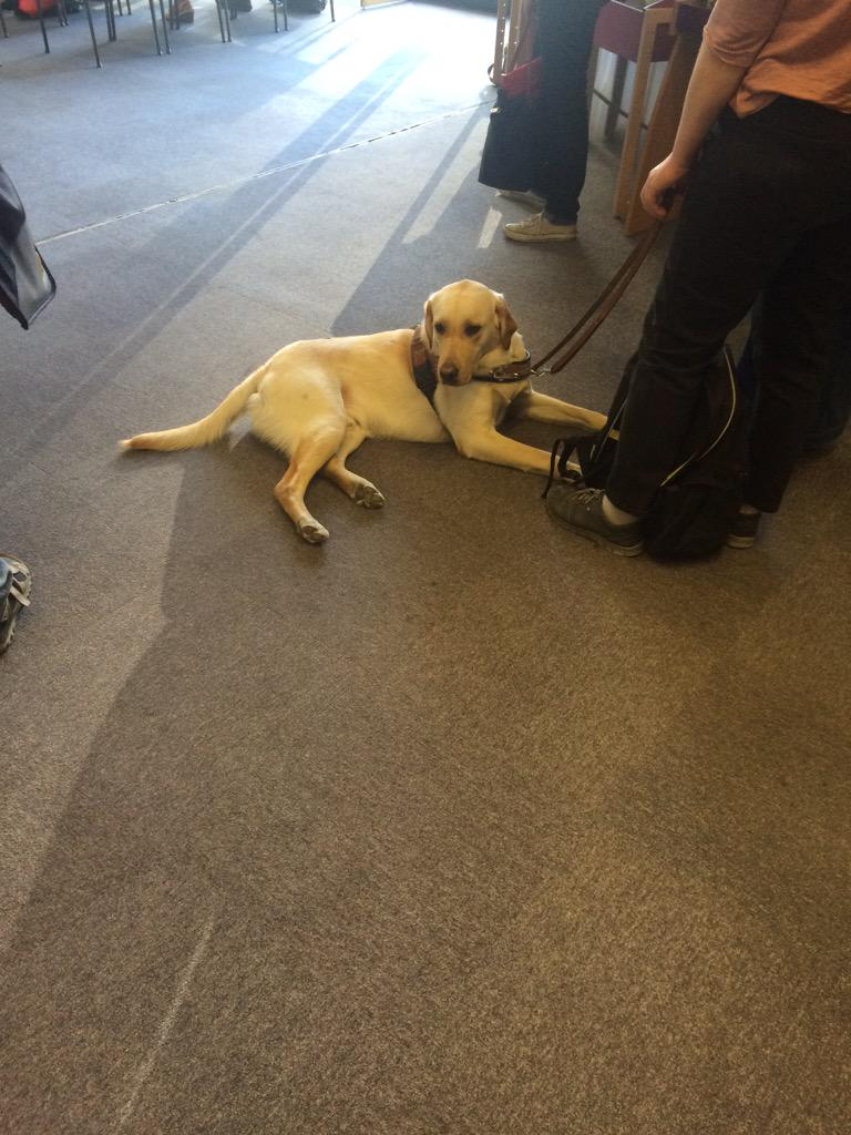 The cutest participant of the conference #EEAF2015 http://t.co/ebKwHg2Twd