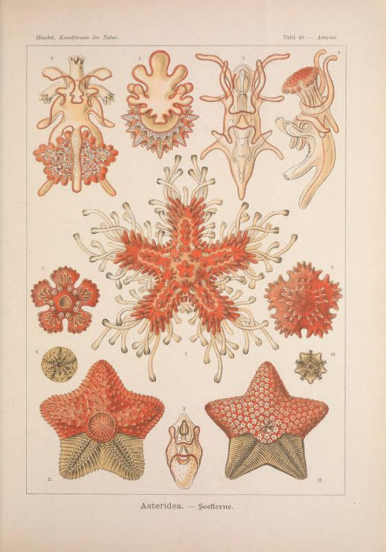 In 1904, Ernst Haeckel popularized marine organisms with detailed drawings: http://t.co/nbjw1YAwCB @BioDivLibrary http://t.co/fC3poSwu4w