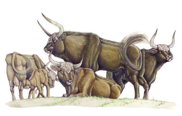 aurochs hashtag on twitter