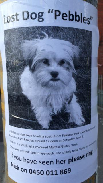 Melb Lost Dog Alert: let's keep an eye out for Pebbles and RT if you have friends in South Yarra Prahran area please http://t.co/oUAUsC5lPT