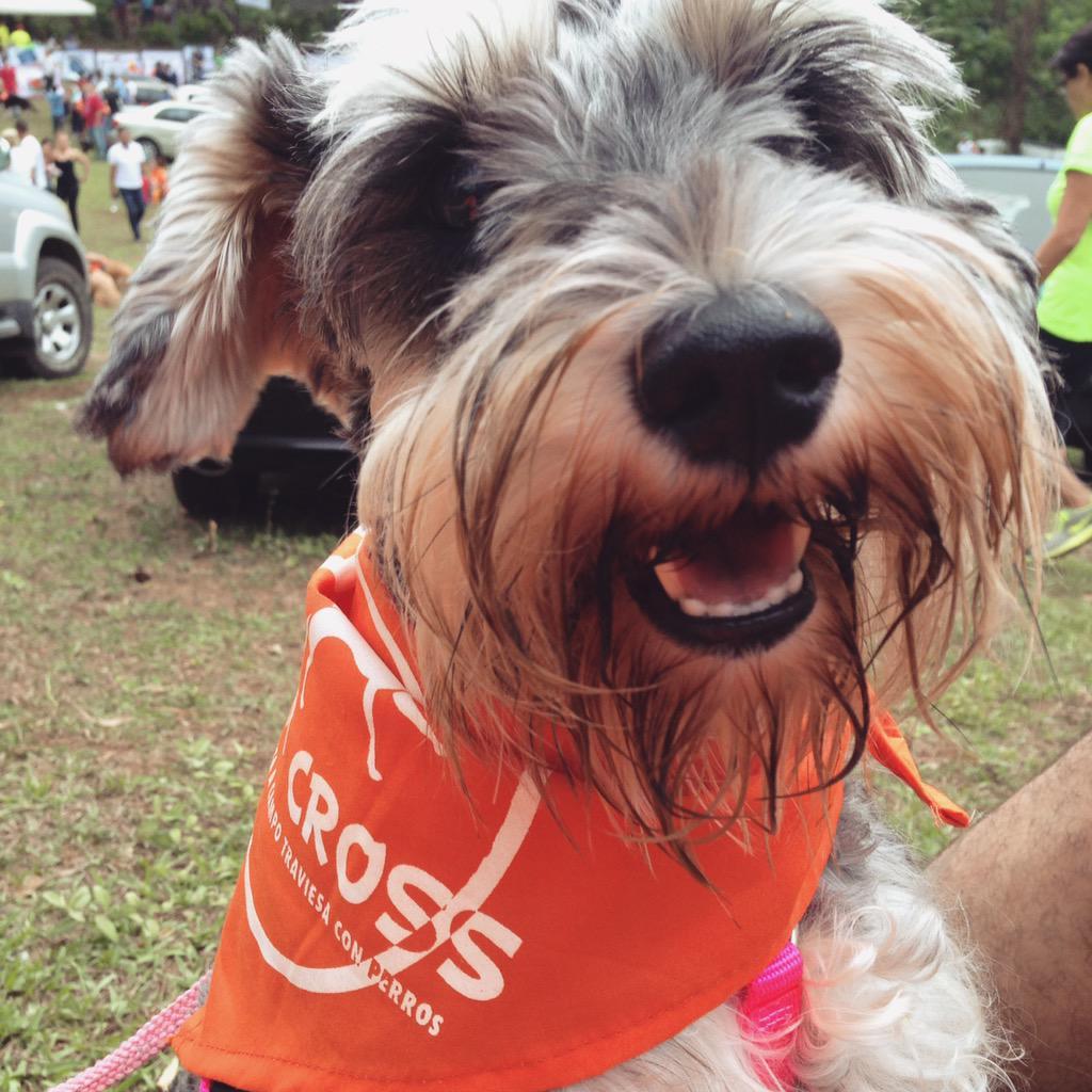 Mila también esta lista para los 5km de #PerroCross 2015 #Nicaragua http://t.co/L4HYp9lMAL
