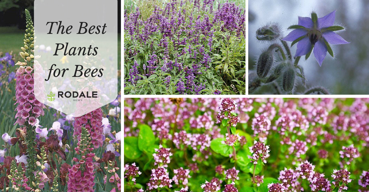 Support #bees in your own #garden with these plants http://t.co/kxqCo8rLKb http://t.co/UkzSoftc50