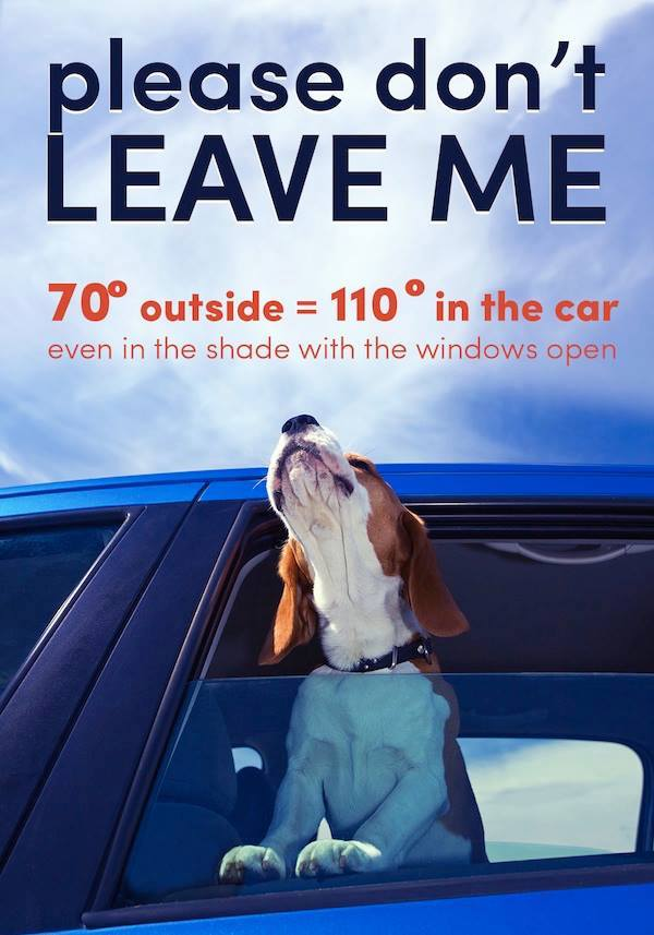 Please don't leave your children or your pets in the car! http://t.co/MNtncJDw8P