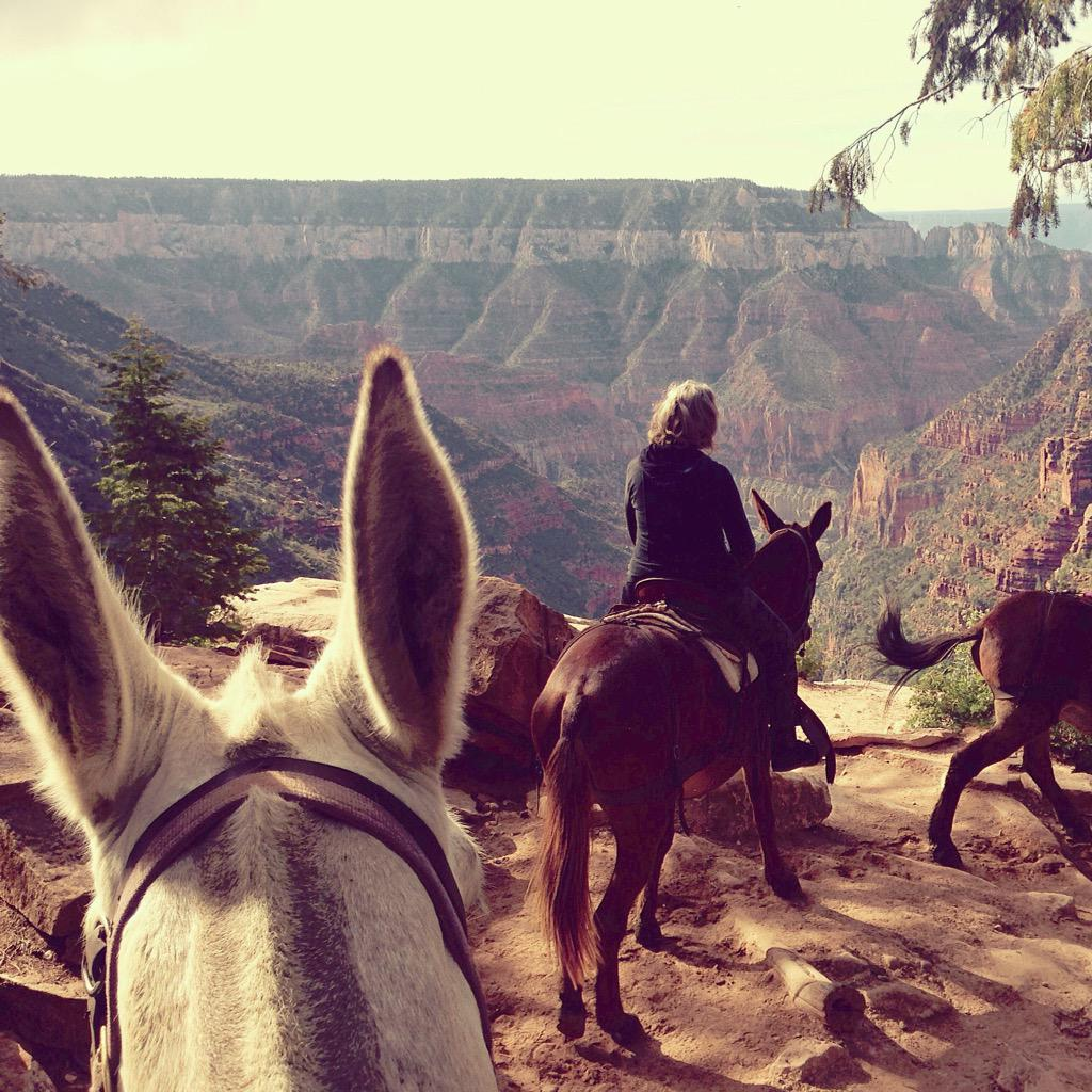 Riding a white mule named Shirley Belle (pronounced with a slow southwestern drawl) down into the Grand Canyon today http://t.co/kHI4pWMOBK