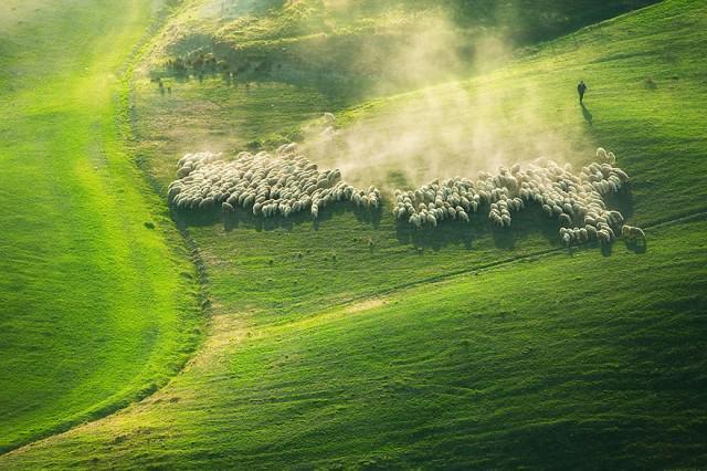 مصور يذهب فى رحله لايطاليا ليلتقط صور لقطيع من الغنم في المراعي