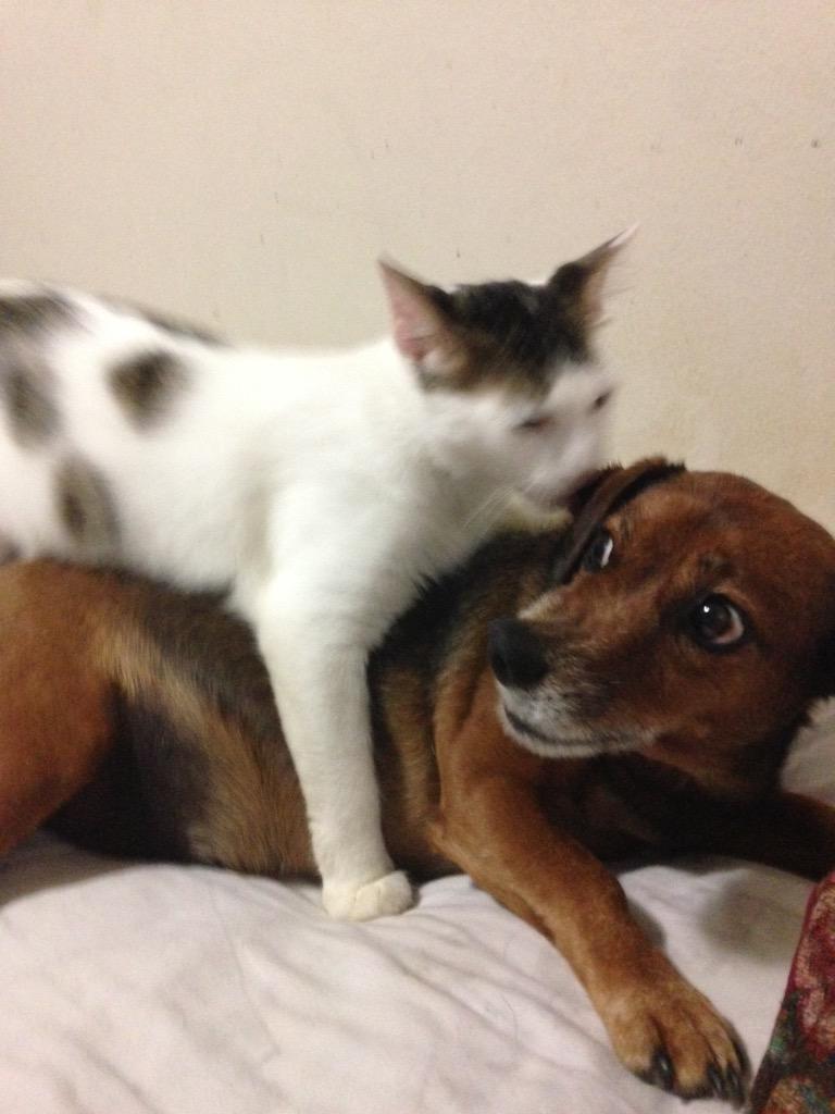 Get it off me!!! http://t.co/xiyORCNVWX