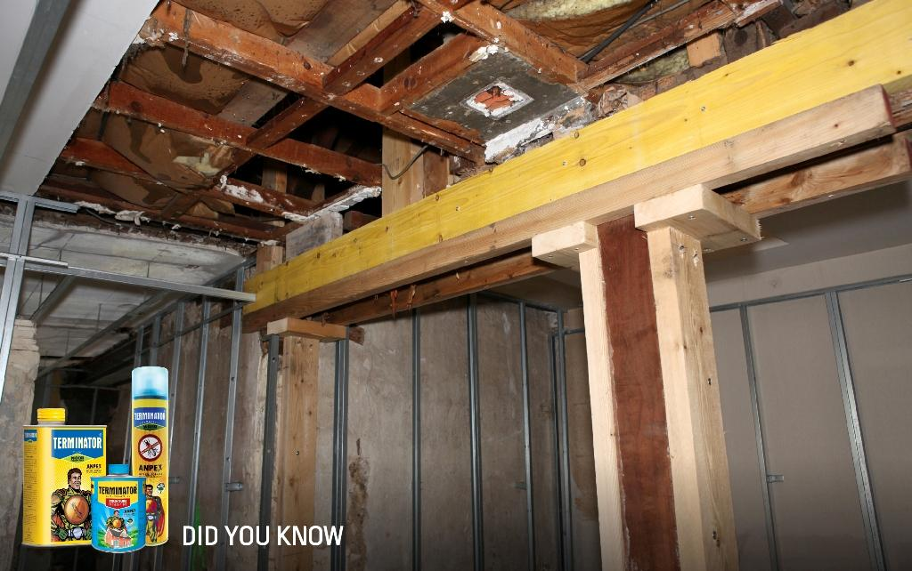 #DidYouKnow A single colony of Formosan #termites can eat the whole structure of your #house within two years. http://t.co/fqRmTWOnsh