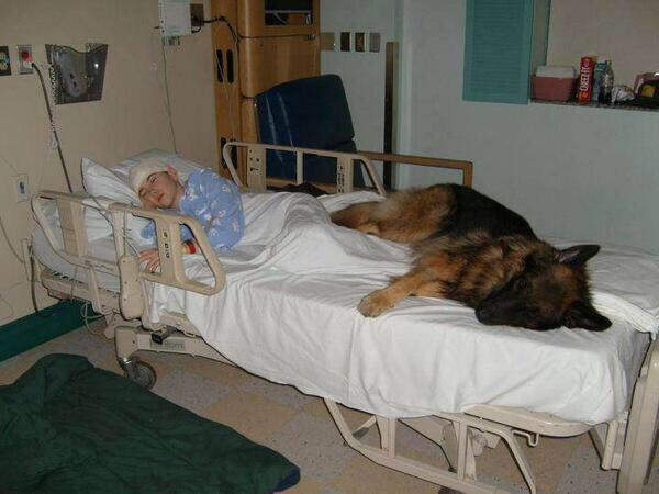 "Applause: ""@phil500: This hospital let a sick boy's dog in to give him comfort. http://t.co/zS2epab1Sv"""