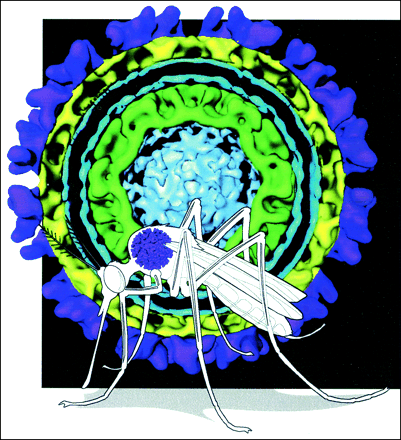 Thumbnail for 2.5 Arbovirus: virus y mosquitos #microMOOC