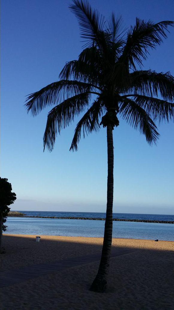 Caribe?  No.  Canarias!!!  #quesuerteviviraqui #DiaDeCanarias http://t.co/74sTzXYjow