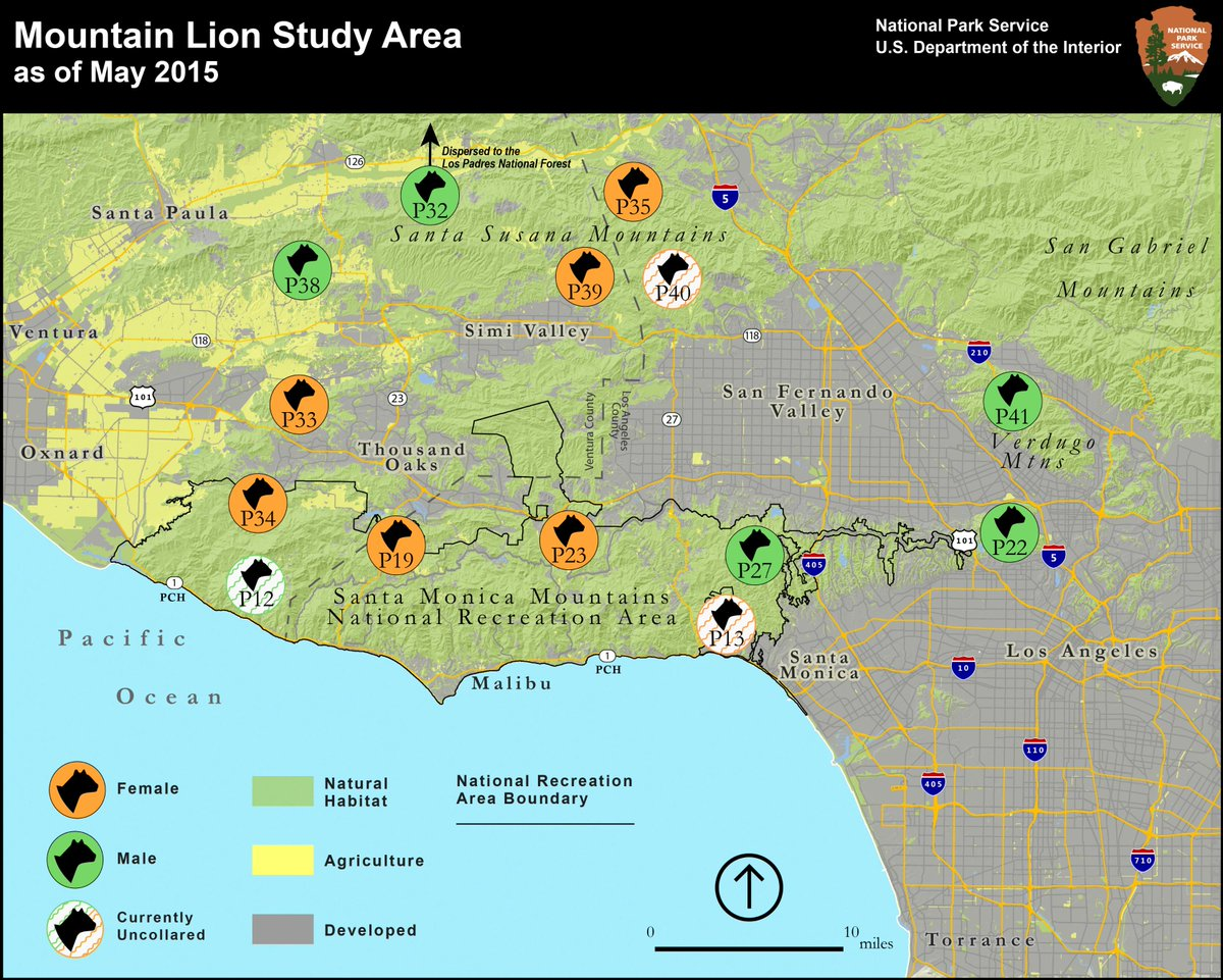 New map of 11 mountain lions we 39 re tracking incl p22 for Find a good builder
