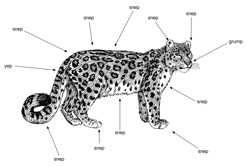 Related Keywords Amp Suggestions For Leopard Diagram