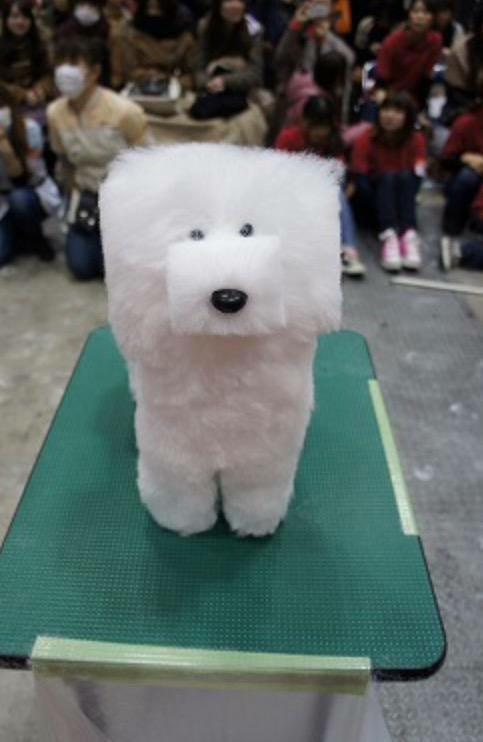 RT @InternetPalace: So there is a trend in Japan to shave dogs' fur into cubes... http://t.co/FdW5t9SQNB