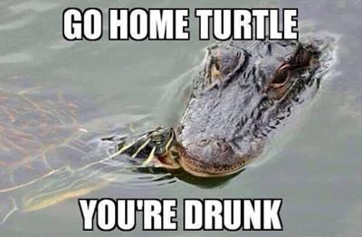 #turtlepower #goturtle #bitehim http://t.co/BMfIKXLtmu