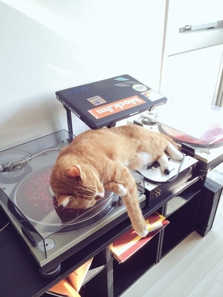 どうしてそこで寝るのか?w http://t.co/5eqbUrxojY