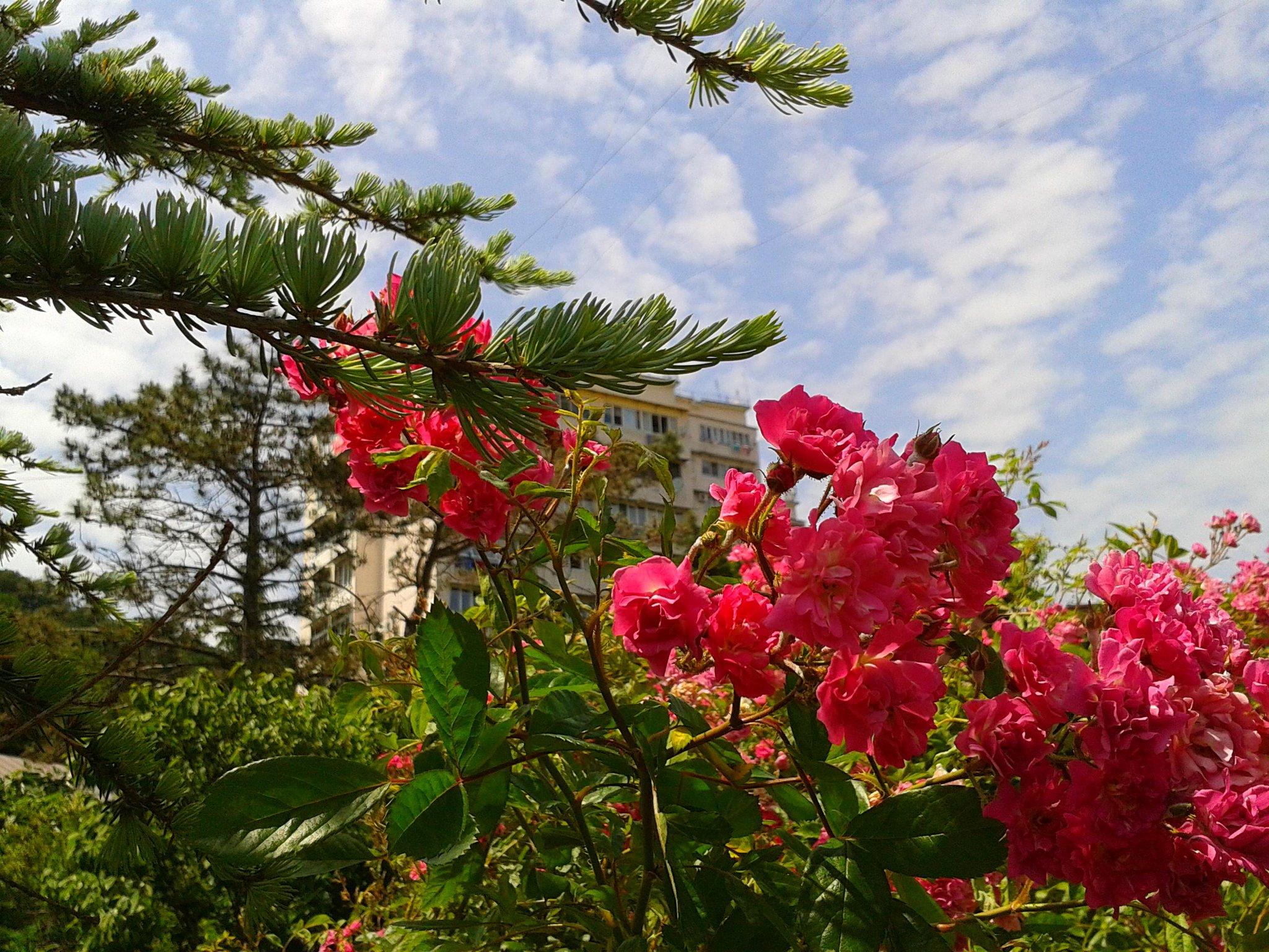 решила показать, цветы растущие в сочи фото ботанических справочниках