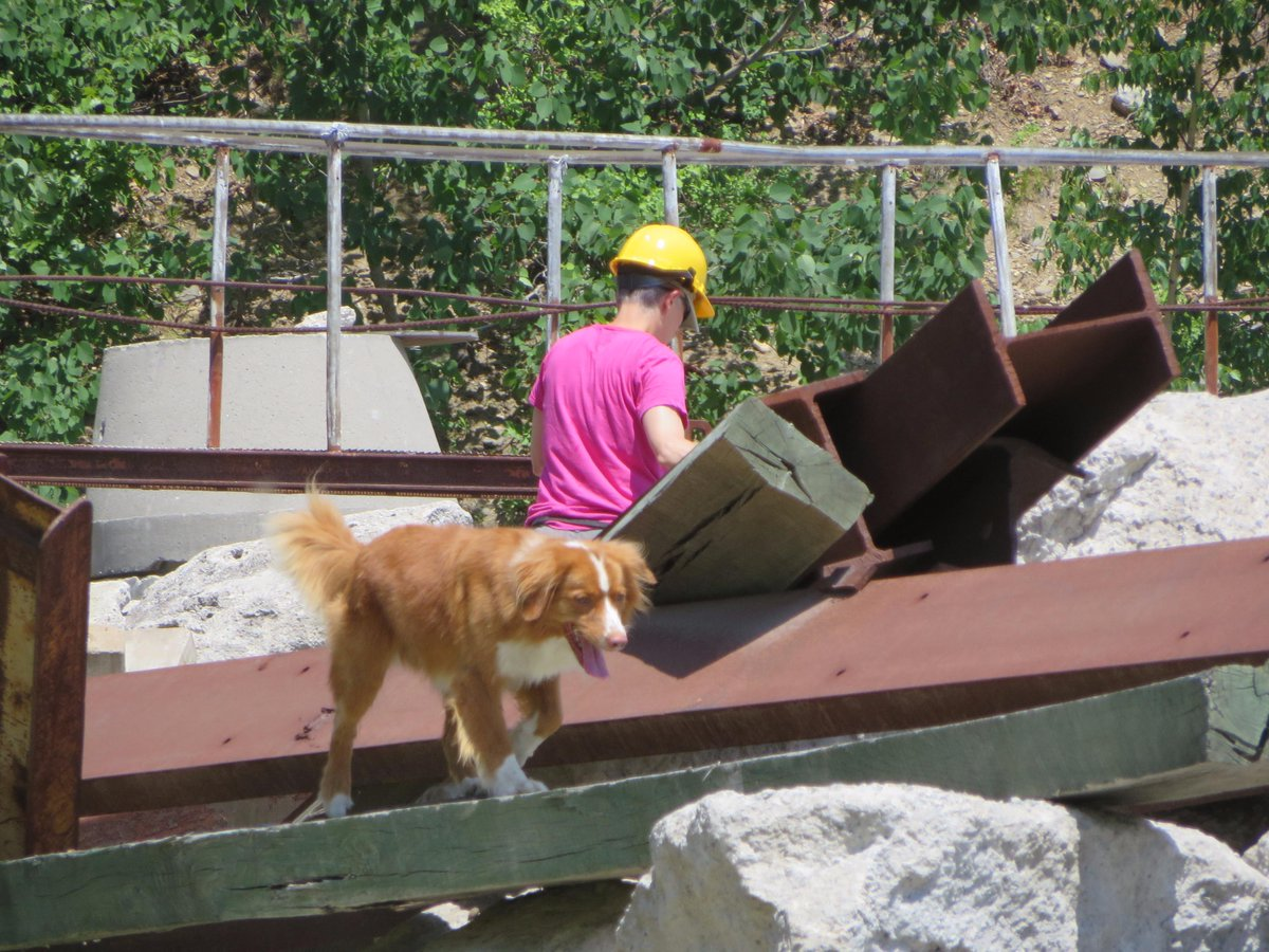 AIUS NER hosts International Rescue Dog Organization to evaluate K-9 teams for live-find disaster search. http://t.co/W5ZVtXSxWA