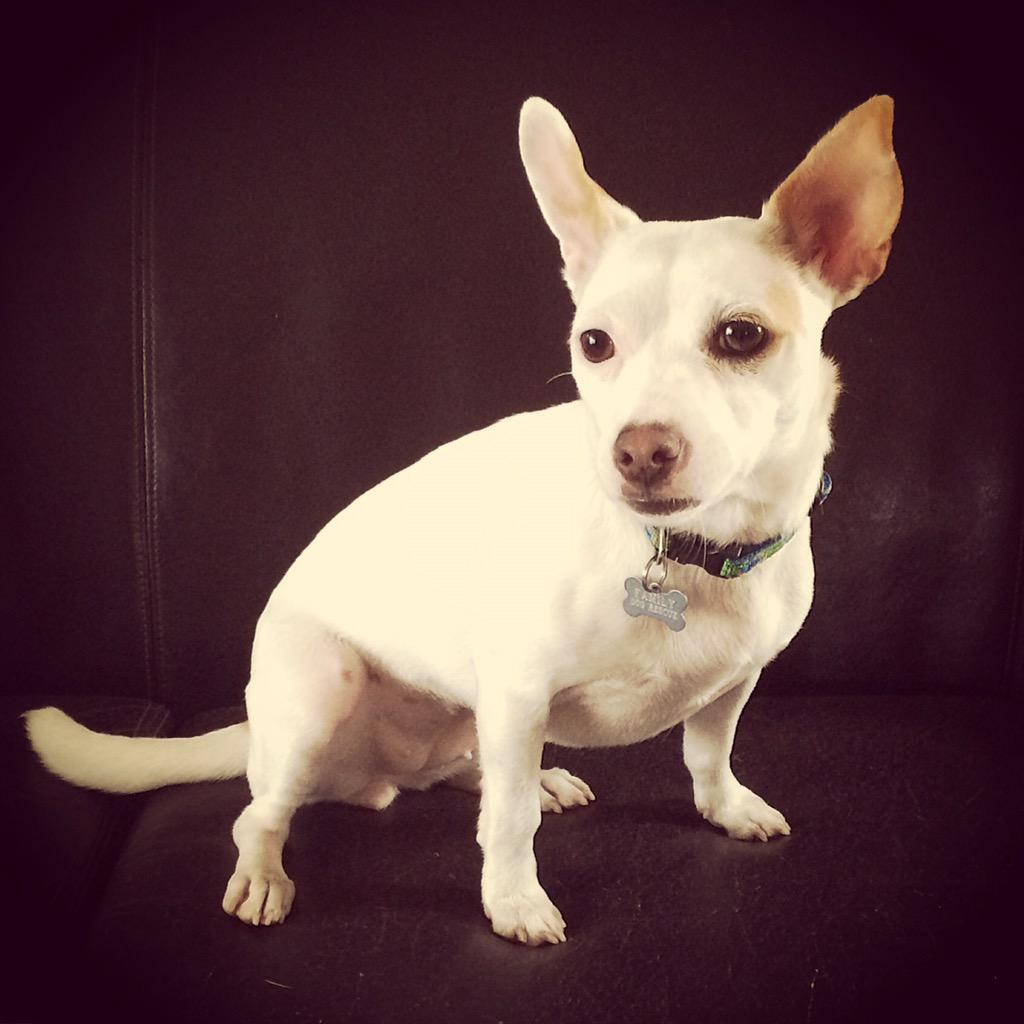 Matza will be at rescue row in San Francisco today looking for her forever home. #adopt matza @ilovefamilydog http://t.co/cwCimIeOqP