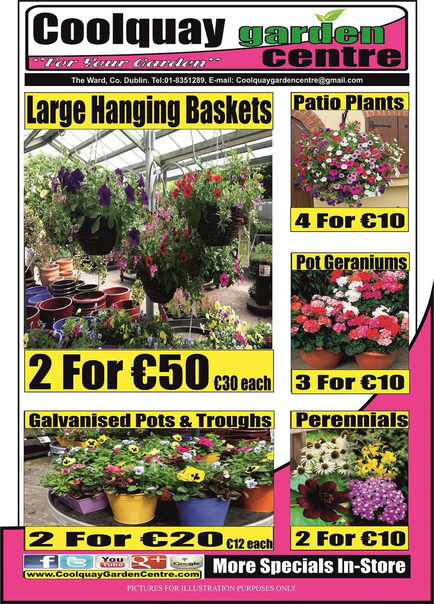 Coolquaygardencentre On Twitter It S All About Colour Here At Coolquay Garden Centre We Ve Got Great Value In Large Hanging Baskets Much More Http T Co T8wznjr7ff