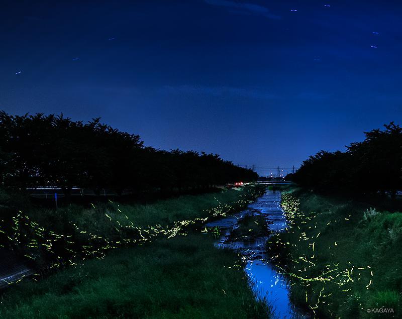 蛍火の河。まるで「銀河鉄道の夜」の幻想世界のよう。(昨夜岐阜にて撮影) pic.twitter.com/Fh608IxjPs