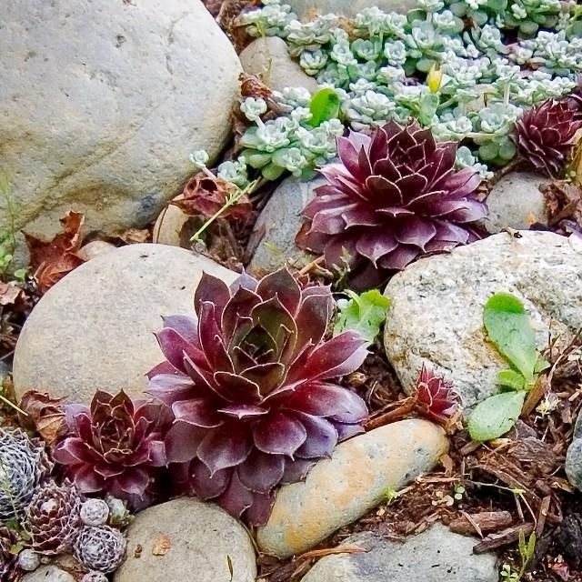 All Succulents On Twitter River Rock Succulent Garden Happy