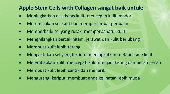 khasiat apple stem cell