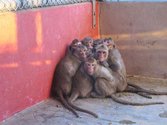 The @USDA inspects Florida monkey farm after @PETA video shows poor conditions. http://t.co/7BuqmFFGYf #SWFL http://t.co/o0grzSNLuP
