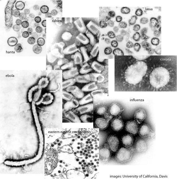 Thumbnail for 2.6 ¿Por qué surgen nuevas infecciones virales? #microMOOC