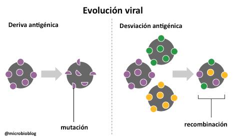 Virus maestros d evolución: alta variabilidad (mutación/recombinación) + rápida multiplicación = evolución #microMOOC http://t.co/kDDsUSADR3