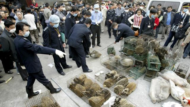Virus SARS: Mercado de civetas para consumo humano en China #microMOOC http://t.co/ILYgZQZTlv