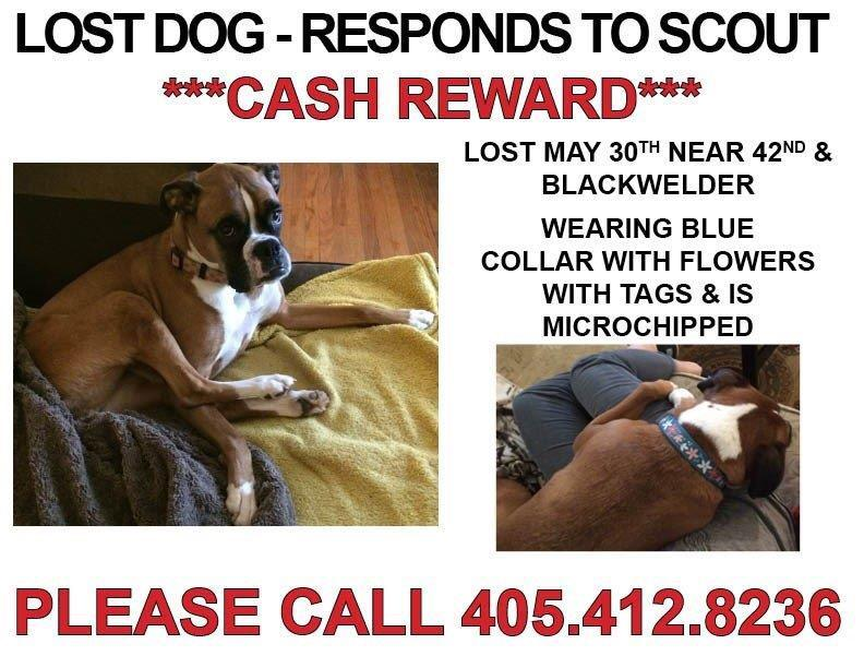 We need your help! Our sister Jamie's pup Scout went missing this weekend, can you retweet for me?❤️ #findscoutokc http://t.co/SrGQrs3MRO