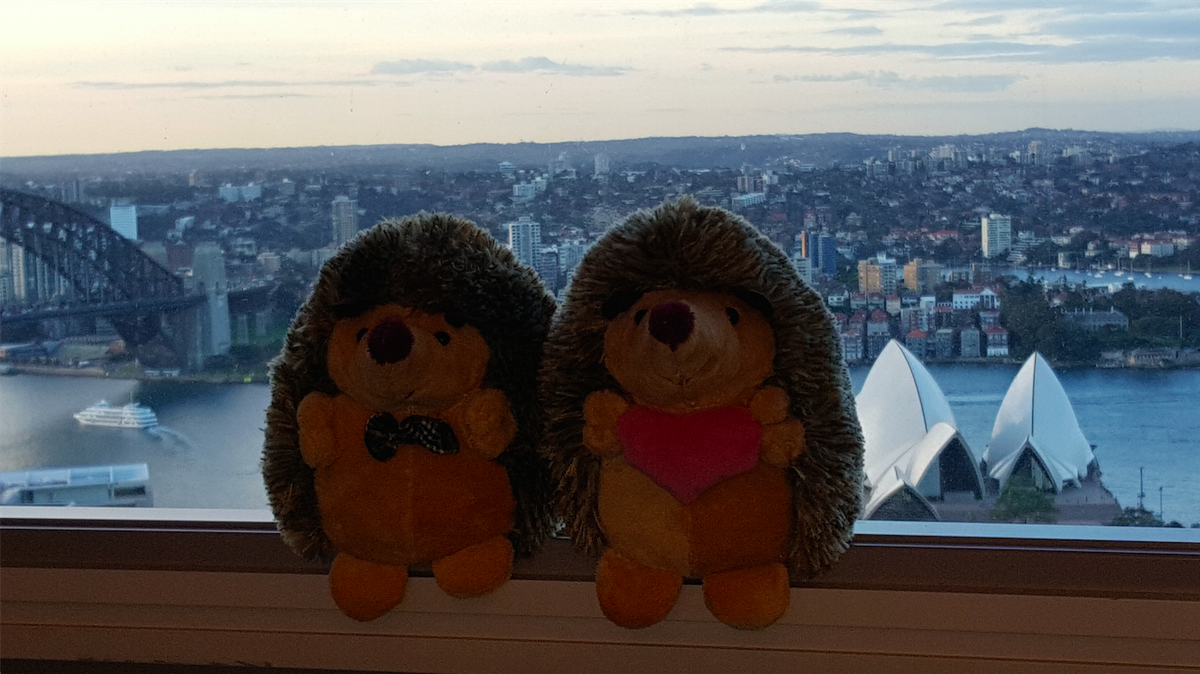 http://t.co/20T1oN3GyB mascots enjoying Sydney Opera House & Harbour Bridge from CEO Registry office #CEORegistry http://t.co/yQYmzScl2A