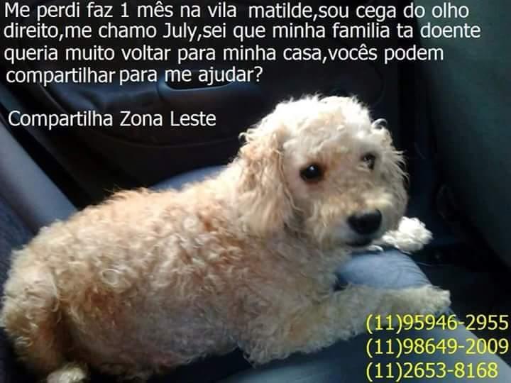 Atenção, Vila Matilde e outras localidades da Zona Leste de SP! Poodle cega do olho direito está desaparecida. http://t.co/peBPdIvQPY